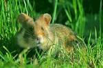 Хомяк в траве