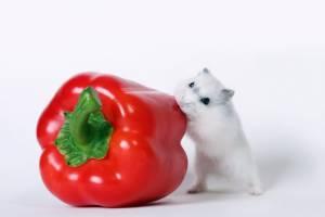 Хомяк и болгарский перец